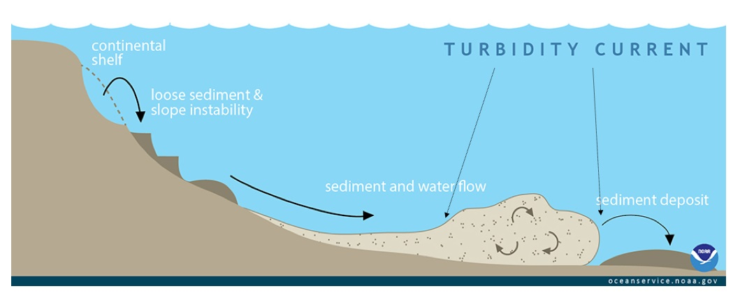 Schematic diagram illustrating a slope failure on a continental margin caused by either a local or distant earthquake, similar to a terrestrial landslide. On the upper part of the continental margin near the shallow continental shelf, shaking from the earthquake dislodges loose sediment, which flows downhill and entrains sea water, becoming more fluid and more turbulent. This chaotic motion of fluid within the sediment flow sustains the turbidity current, which can flow for hundreds of kilometers once it reaches the deep abyssal plain. Credit: NOAA/public domain