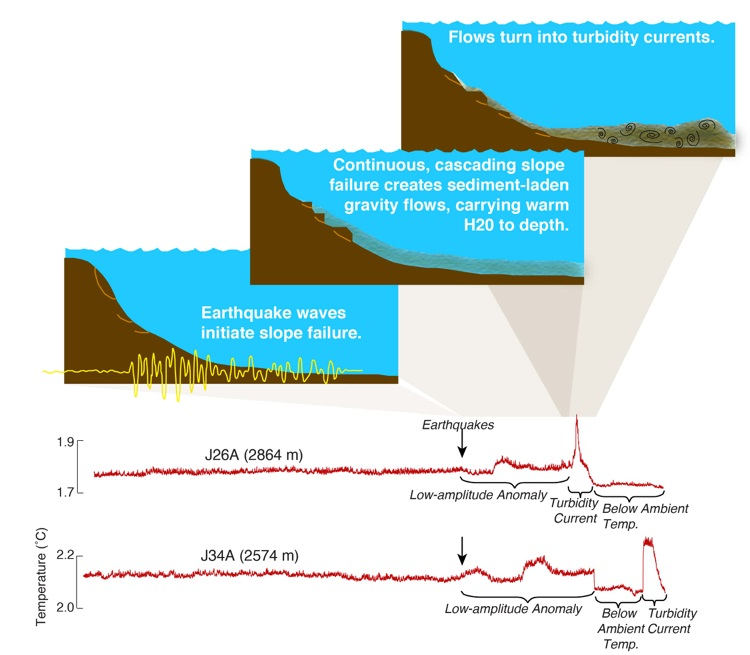 The sequence of geological processes that produce the signal observed in the ocean bottom seismometers. First, shaking from the distant earthquake (Indian Ocean) causes a marine landslide of sediments on the steep continental margin. This downslope flow of sediments entrains warm seawater from the shallow ocean, producing temperature anomalies as the sediment flows past the ocean bottom seismometer. Low amplitude anomalies are the smaller slope failures that precede the large temperature spikes from the main turbidity currents, similar to what is observed with terrestrial landslides. Credit: University of Washington/open access